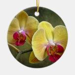 Yellow Moth Orchids - Phalaenopsis Ceramic Ornament