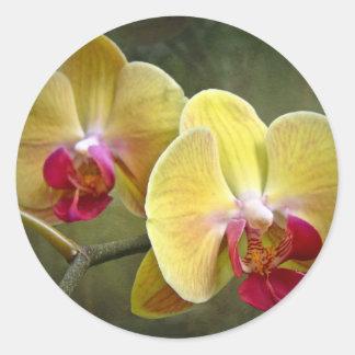 Yellow Moth Orchids - Phalaenopsis Classic Round Sticker