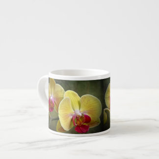 Yellow Moth Orchids - Phalaenopsis Espresso Cup