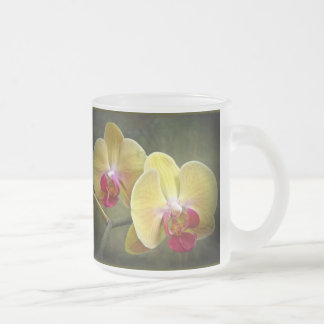 Yellow Moth Orchids - Phalaenopsis Frosted Glass Coffee Mug