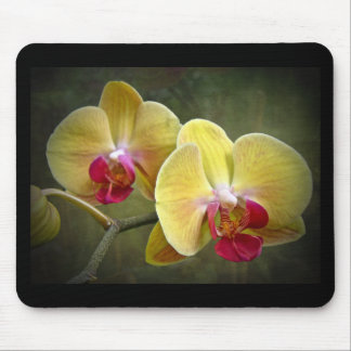 Yellow Moth Orchids - Phalaenopsis Mouse Pad