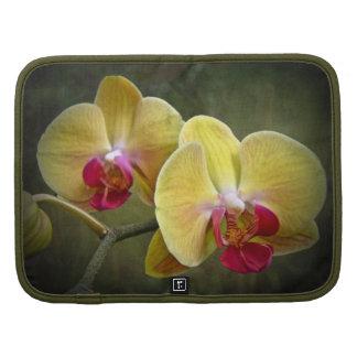 Yellow Moth Orchids - Phalaenopsis Planner