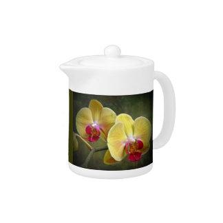 Yellow Moth Orchids - Phalaenopsis