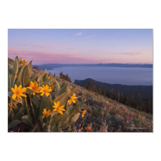 Yellow Mules Ear Flowers at Sunset Card