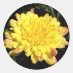 Yellow Mum Classic Round Sticker
