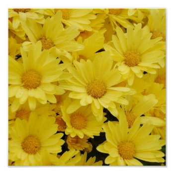 Yellow Mums Photo Print by PerennialGardens at Zazzle