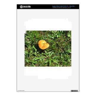 Yellow mushroom on a green meadow iPad 3 decals