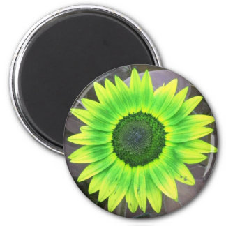 Yellow N Green Sunflower Magnet