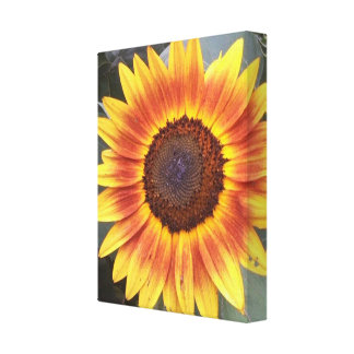 Yellow N Orange Sunflower Wrapped canvas Stretched Canvas Print
