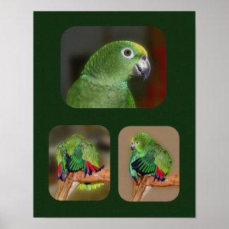 Yellow Nape Amazon Parrot Collage Poster
