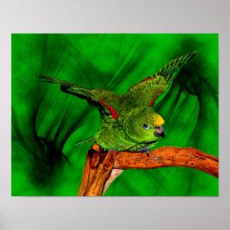 Yellow Naped Amazon Fantasy Parrot Poster