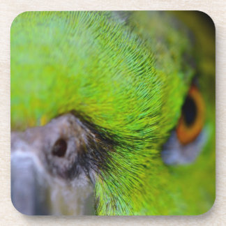 Yellow-Naped Amazon Parrot by Shirley Taylor Beverage Coaster