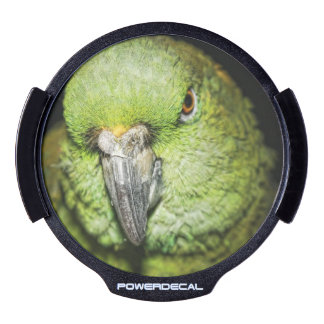 Yellow-Naped Amazon Parrot LED Window Decal
