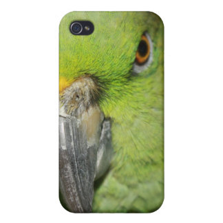 Yellow-Naped Amazon Parrot Iphone Case 4G