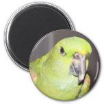 Yellow-Naped Amazon Parrot Magnet