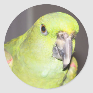 Yellow-Naped Amazon Parrot Sticker