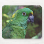 Yellow Naped Amazon Photography Mouse Pads