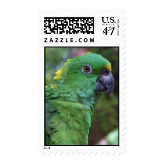 Yellow Naped Amazon Photography Postage
