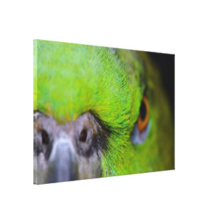 Yellow-Naped Parrot Canvas Print