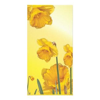 Yellow Narcissus Daffodil Retro Vintage Card
