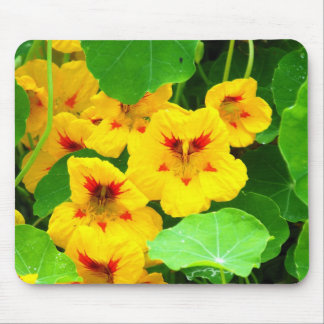 Yellow Nasturtiums Mouse Pad