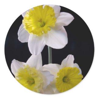Yellow on White Daffodil zazzle_sticker