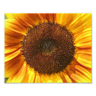 Yellow, Orange, and Brown Sunflower Closeup Photo