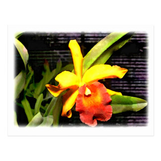 Yellow & Orange Cattleya Orchid in Hothouse Postcard