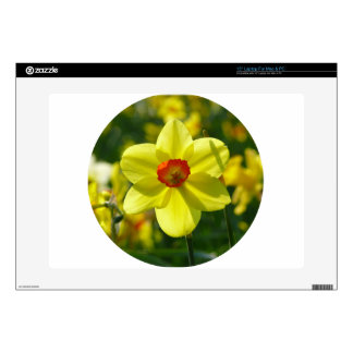 Yellow orange Daffodil 02.0_rd Decals For Laptops