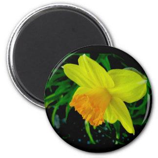 Yellow Orange Daffodil Magnet