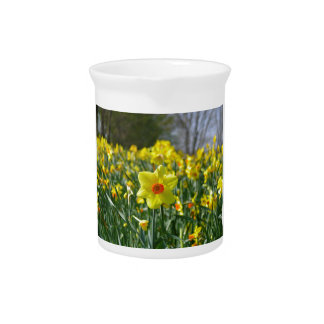 Yellow orange Daffodils 01.0.2 Pitcher