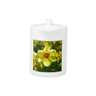 Yellow orange Daffodils 02.1g Teapot