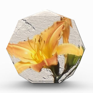 Yellow-Orange Day Lily Award