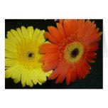 Yellow & Orange Gerber daisy Greeting Card