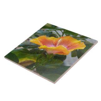 Yellow orange Hibiscus flower Tile