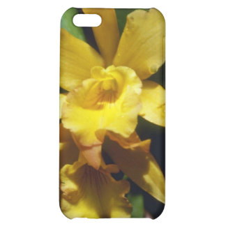 yellow Orange Nugget (Brassocleya) flowers Case For iPhone 5C