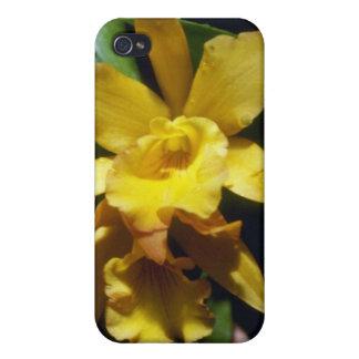 yellow Orange Nugget (Brassocleya) flowers iPhone 4/4S Case
