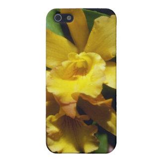 yellow Orange Nugget (Brassocleya) flowers iPhone 5 Case