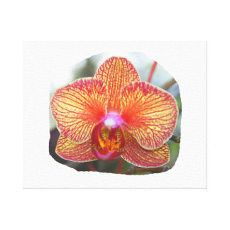 Yellow Orange Orchid Flower Picture Canvas Print