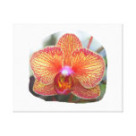 Yellow Orange Orchid Flower Picture Canvas Prints