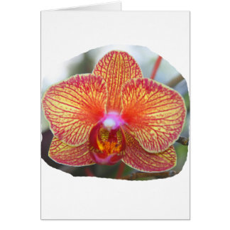 Yellow Orange Orchid Flower Picture Card