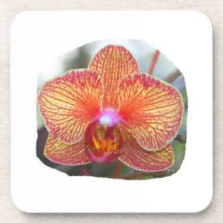 Yellow Orange Orchid Flower Picture Coaster