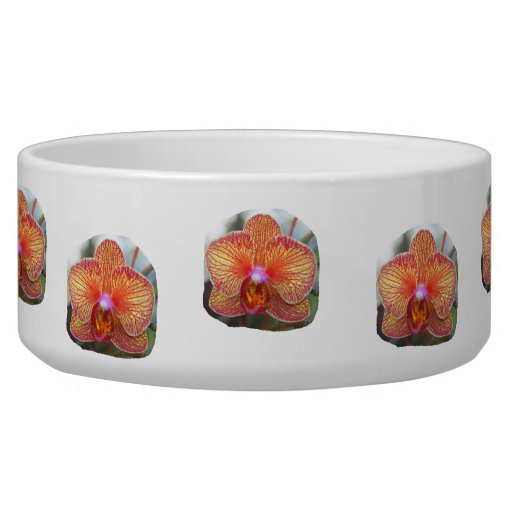 Yellow Orange Orchid Flower Picture Dog Food Bowl
