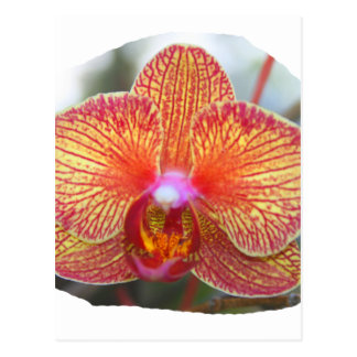Yellow Orange Orchid Flower Picture Postcard