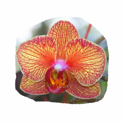 Yellow Orange Orchid Flower Picture Standing Photo Sculpture
