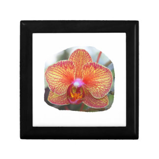 Yellow Orange Orchid Flower Picture Trinket Boxes