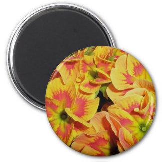 Yellow Orange Primrose Magnet