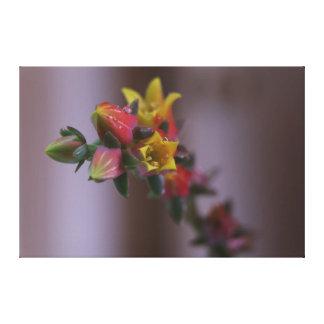 Yellow Orange Succulent Flower Canvas Print