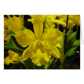 Yellow orchid cards