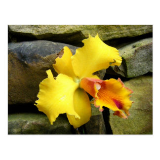 yellow orchid color photo art picture postcard